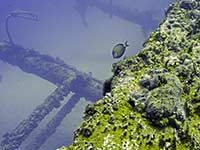 Peeking along the Chikuzen wreck