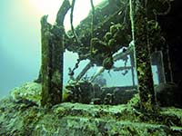 Growth on the coral gardens wreck