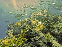Fish along the reef at POS