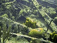 Sponges and coral on the wreck