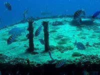 Sergeant Majors on the wreck