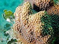 Corals in Grand Case