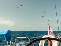 Birds on passage, 20 miles out to sea