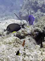 Various fish on the reef
