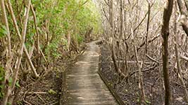 Path through the mangroves
